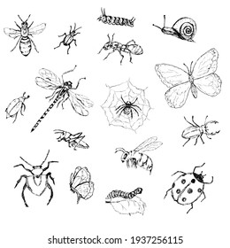 set of insects, pencil drawing. Black and white beetles, butterflies, caterpillar isolated on white. Outline, sketch