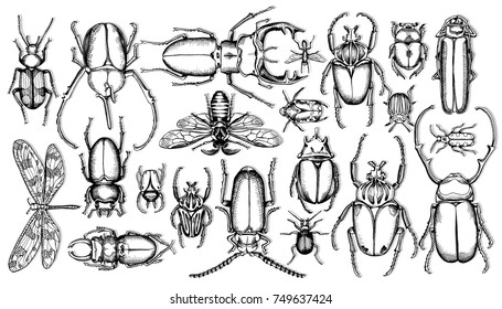 Set of insects. Vector black and white illustration.