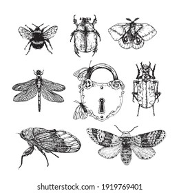 Set insects. Vector linear illustration.