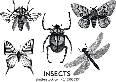 Set of insects in vintage hand drawn style. Macro entomological set. Sketched hand drawn creatures set - Vector