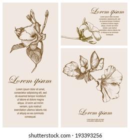 set of invitation card, greeting with plumeria (Frangipani), hibiscus, jasmin flowers