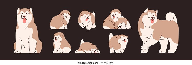 Set of isolated Alaskan Malamutes. Cute and funny Chinese dogs and puppies. Happy doggies sitting, standing, running and sleeping. Colored flat vector illustration of adorable pets with tongue out