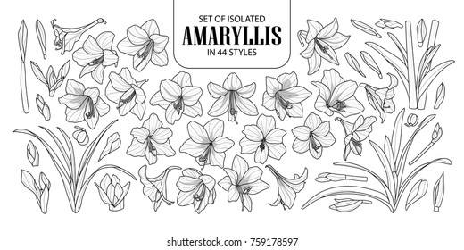 Set of isolated Amaryllis or Hippeastrum in 44 styles. Cute hand drawn flower vector illustration in black outline and white plane on white background.