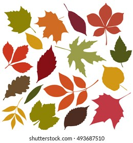Set of isolated autumn colored leaves  on white