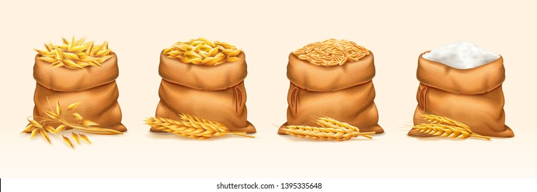 Set of isolated bags with wheat and rye, barley and oat, flour. Sack full of seeds near ear or straw. Agriculture crop plants with stem. Cultivated rural harvest. Rustic food, nutrition, farming theme