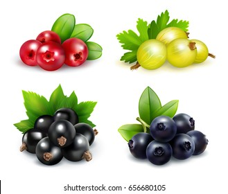 Set of isolated berry clusters in realistic style with gooseberries cranberries blueberries and black currants vector illustration