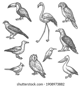 Set of isolated bird wildlife sketches. Songbird and owl, pelican and gull, ara parrot and toucan, hummingbird or colibri, flamingo and hawk, eagle. Flying animal vintage vector sign. Ornithology