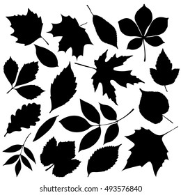 Set of isolated black autumn leaves  on white