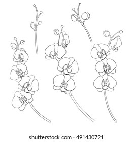 Set of isolated branches of orchids hand-drawn black outline. On a white background isolated. White phalaenopsis. Hand drawn vector illustration.