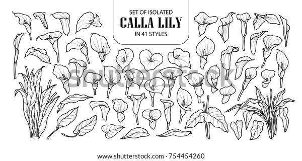 Set of isolated Calla lily in 41 styles. Cute hand drawn flower vector illustration in black outline and white plane on white background.