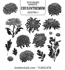 Set of isolated chrysanthemum collection 2. Cute flower illustration in hand drawn style. Presented in silhouette on white background.