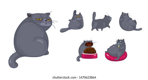 Set of isolated cute British cats and kittens in different emotions and poses in cartoon style. - Vector