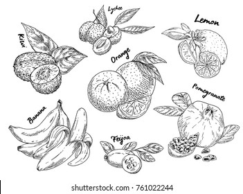 Set of isolated exotic and tropical fruits. Orange and kiwi, lychee or litchi, liche or lizhi li, lemon and pomegranate, banana and feijoa. Organic and natural nutrition, vegetarian food market theme