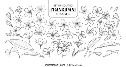 Set of isolated frangipani in 35 styles. Cute hand drawn flower vector illustration in black outline and white plane on white background.