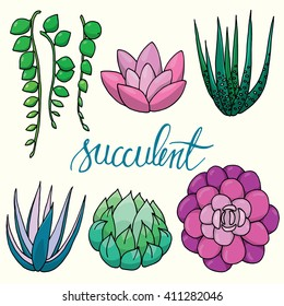 Set of isolated hand drawn vector succulents