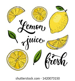 set of isolated hand lettering quotes, sketched lemons and leaves for posters, logos, labels, banners, stickers, product packaging design, etc