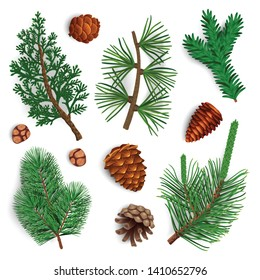 Set with isolated images of pine tree cone fir needle foliage with shadows on blank background vector illustration