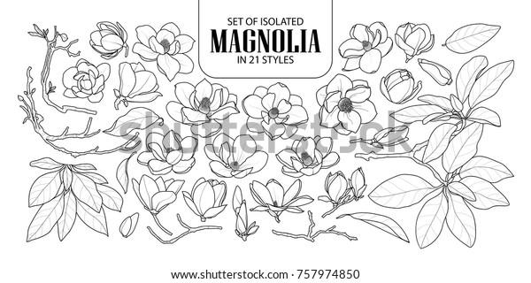 Набор изолированных магнолии в 21 стиле. Симпатичные ручной рисунок цветок вектор иллюстрации в черном контуре и белой плоскости на белом фоне.