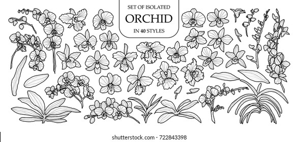 Set of isolated orchid in 40 styles. Cute hand drawn vector illustration in black outline and white plane on white background.