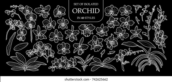 Set of isolated orchid in 40 styles. Cute hand drawn flower vector illustration only white outline on black background.