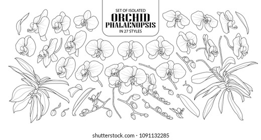 Set of isolated orchid, Phalaenopsis in 27 styles. Cute hand drawn flower vector illustration in black outline and white plane on white background.