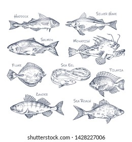 Set of isolated river and ocean fish sketches. Haddock and silver hake, salmon and monkfish, fluke and eel, tilapia and zander, sea roach. Underwater and water wildlife, nautical and food theme