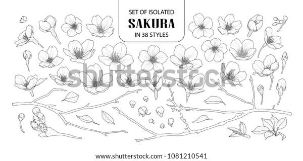 Набор изолированных сакуры в 38 стилях. Симпатичные ручной рисунок цветок вектор иллюстрации в черном контуре и белой плоскости на белом фоне.
