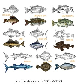 Set of isolated sea or ocean fish side view. Sketches of crucian carp and smallmouth, largemouth bass, zandar and bonito or sardini tuna, monkfish and barracuda, salmon. Fish catch or trophy