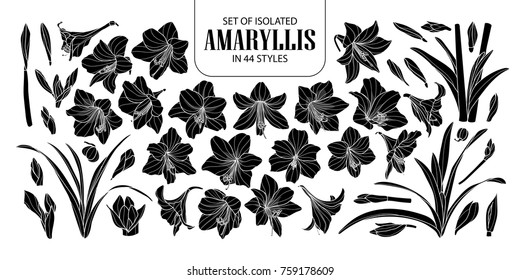 Set of isolated silhouette Amaryllis or Hippeastrum in 44 styles. Cute hand drawn flower vector illustration in white outline and black plane on black background.