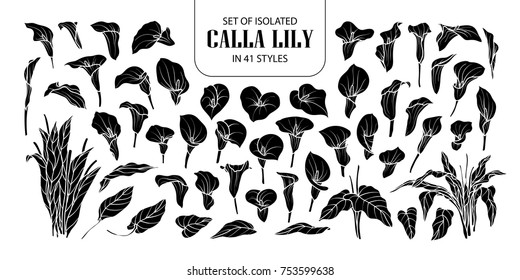 Set of isolated silhouette Calla lily in 41 styles. Cute hand drawn flower vector illustration in white outline and black plane on black background.