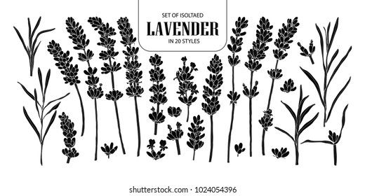 Set of isolated silhouette lavender in 20 styles. Cute hand drawn flower vector illustration in white outline and black plane on black background.