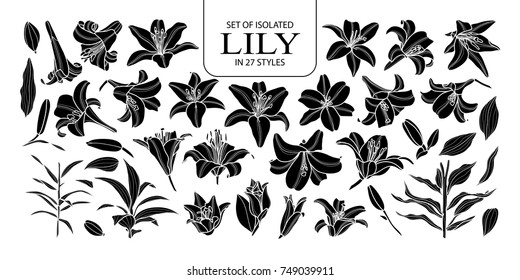 Set of isolated silhouette lily in 27 styles. Cute hand drawn flower vector illustration in white outline and black plane on black background.