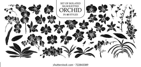Set of isolated silhouette orchid in 40 styles. Cute hand drawn vector illustration in white outline and black plane on white background.
