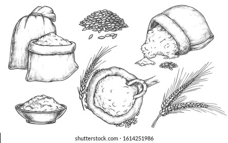 Set of isolated sketch of wheat grain and spikes, flour in bag. Hand drawn spikelet or ear, vintage spica sheaf, burlap sack with scoop. Bakery and bread, oat, rye and barley, food and harvest, crop