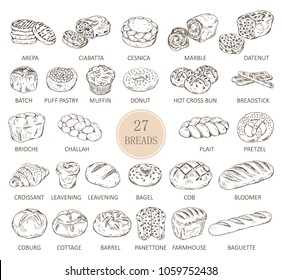 Set of isolated sketches of breads. Loaf of arepa and sliced ciabatta, cesnica and muffin, donut or doughnut, hot cross bun and breadstick, challah and plait, pretzel and croissant. Food and bakery
