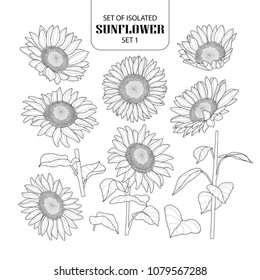 Set of isolated sunflower set 1. Cute hand drawn vector illustration in black outline and white plane on white background.
