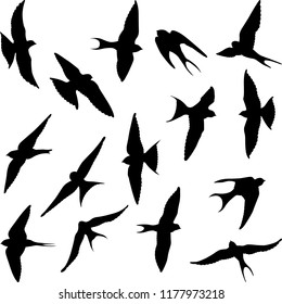 set of isolated swallow silhouettes