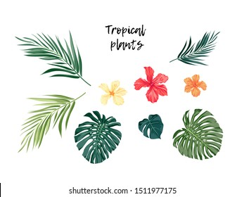 Set of isolated tropical plants, monstera palm leaves and hibiscus flowers, vector illustration.