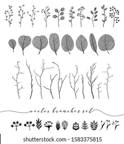 Set of isolated vector branch and leaf, autumn, spring, summer. Detailed macro illustration, not autotrace, constructor design
