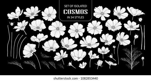 Set of isolated white silhouette cosmos in 34 styles. Cute hand drawn flower vector illustration in white plane without outline on black background.