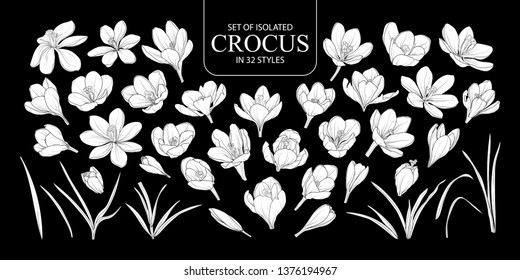 Set of isolated white silhouette Crocus in 32 styles. Cute hand drawn flower vector illustration in white plane without outline on black background.