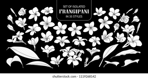 Set of isolated white silhouette frangipani in 35 styles. Cute hand drawn flower vector illustration in white plane without outline on black background.