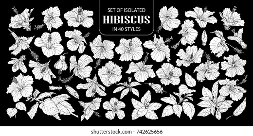 Set of isolated white silhouette hibiscus in 40 styles .Cute hand drawn flower vector illustration in white plane and no outline on black background.
