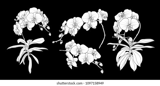 Set of isolated white silhouette orchid branch in 4 styles set 1. Cute hand drawn flower vector illustration in white plane without outline on black background.