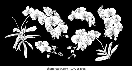 Set of isolated white silhouette orchid branch in 5 styles set 2. Cute hand drawn flower vector illustration in white plane without outline on black background.