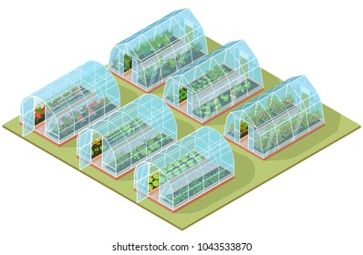Set of isometric glass greenhouse with growing vegetables and colorful flowers. Vector illustration