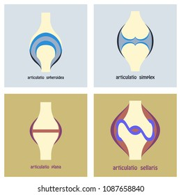 Set of Knee joint health care icon flat