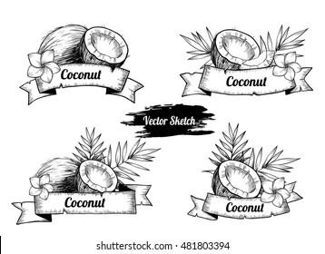 Set of labels with coconut. Vintage design elements, logos, labels, icons.