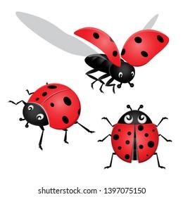 Set of ladybug, ladybird, bug