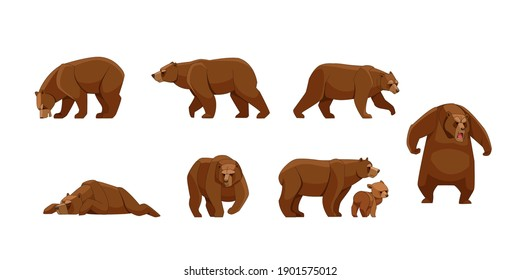 Set of large brown bear in different poses looking, running, walking, sleeping, attack. Wild forest creature different poses. Vector flat cartoon character of big mammal animal illustrations isolated.